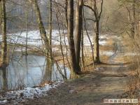 drzewokrzew_149