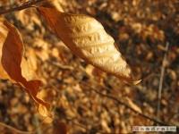 drzewokrzew_151