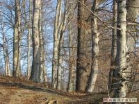 drzewokrzew_152