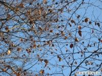 drzewokrzew_156