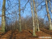 drzewokrzew_157