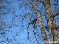 drzewokrzew_158