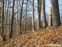 drzewokrzew_159