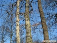 drzewokrzew_160
