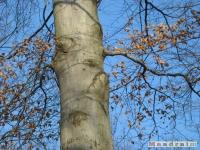 drzewokrzew_161