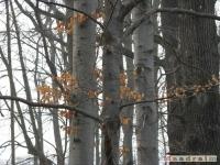 drzewokrzew_162