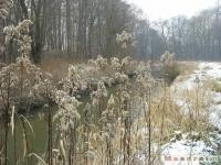 drzewokrzew_164