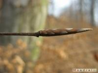 drzewokrzew_166
