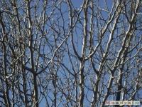 drzewokrzew_167