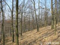 drzewokrzew_176