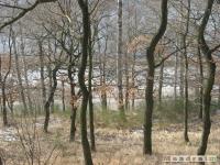 drzewokrzew_179