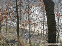 drzewokrzew_182