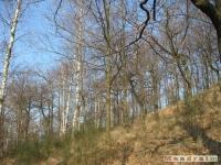 drzewokrzew_183