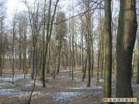 drzewokrzew_184