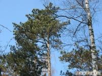 drzewokrzew_185