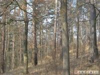 drzewokrzew_186