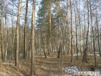 drzewokrzew_190