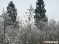 drzewokrzew_216