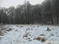 drzewokrzew_218