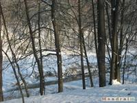 drzewokrzew_222