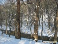 drzewokrzew_224
