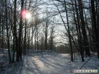 drzewokrzew_226
