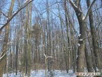 drzewokrzew_229