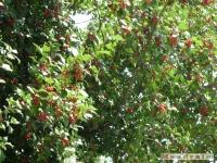 drzewokrzew_351