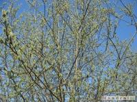 drzewokrzew_360