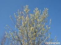 drzewokrzew_367