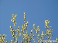 drzewokrzew_369