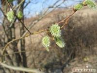 drzewokrzew_381