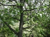 drzewokrzew_385
