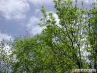 drzewokrzew_394