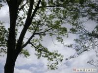 drzewokrzew_395