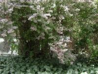drzewokrzew_396