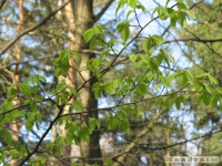 drzewokrzew_402