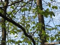 drzewokrzew_403