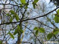 drzewokrzew_405