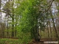 drzewokrzew_414