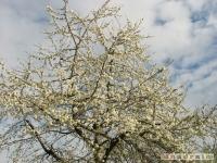drzewokrzew_420