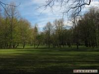 drzewokrzew_422