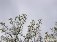 drzewokrzew_425