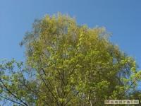 drzewokrzew_426