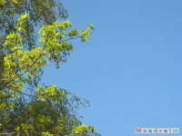 drzewokrzew_427