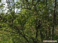 drzewokrzew_430