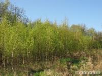 drzewokrzew_436