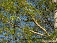 drzewokrzew_439