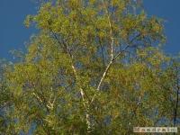 drzewokrzew_440