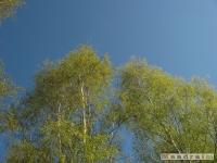 drzewokrzew_443